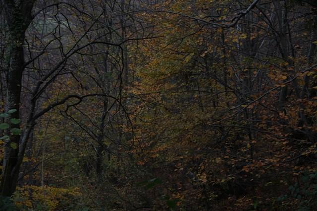 Samsun'un İncisi Nebiyan Dağı galerisi resim 10
