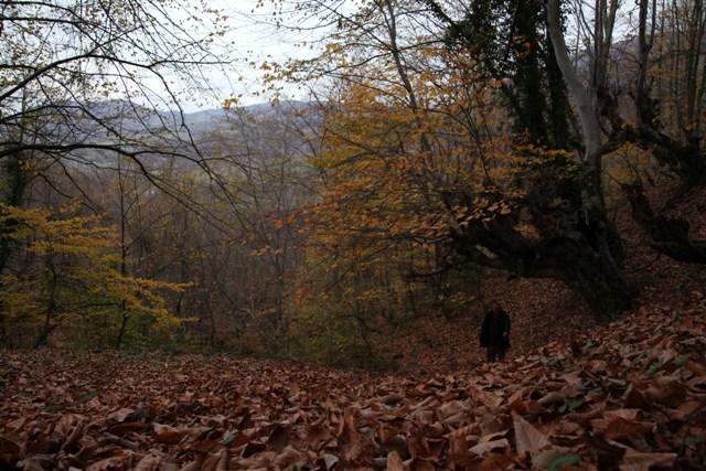 Samsun'un İncisi Nebiyan Dağı galerisi resim 8