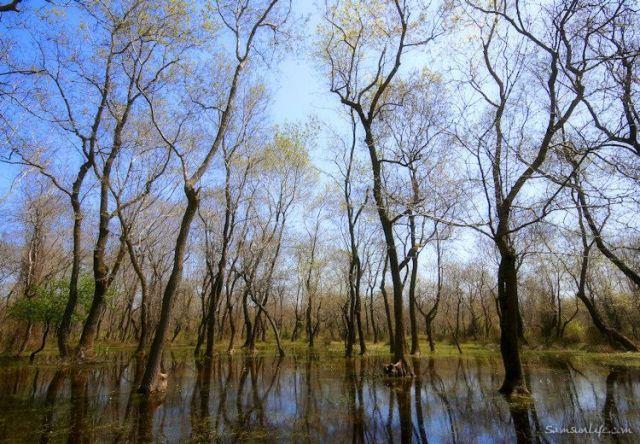 Samsun Kızılırmak Deltası galerisi resim 10