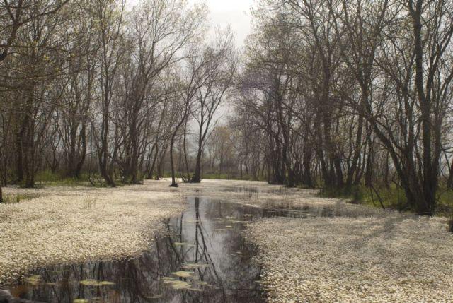 Samsun Kızılırmak Deltası galerisi resim 12