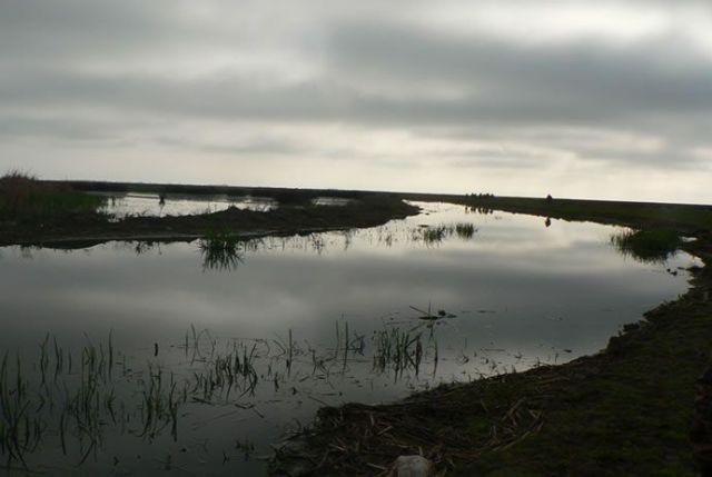 Samsun Kızılırmak Deltası galerisi resim 13