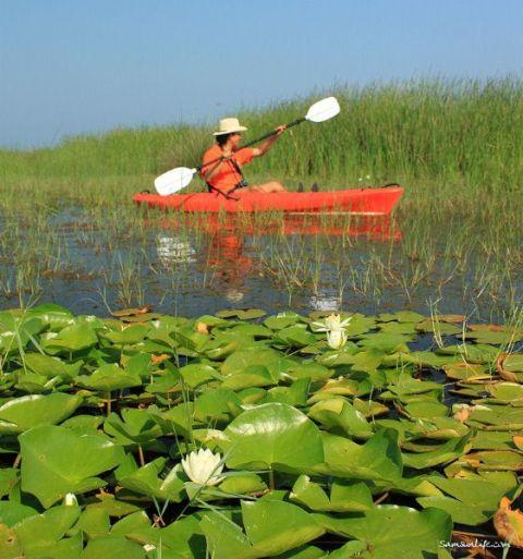 Samsun Kızılırmak Deltası galerisi resim 9