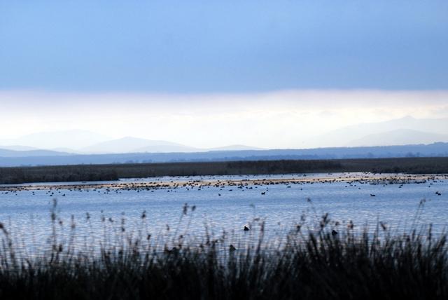 Kuğular Kışı Kızılırmak'ta Geçiriyor galerisi resim 14