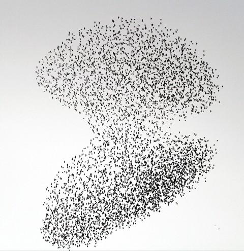 Gökyüzünde Sığırcık Şöleni  galerisi resim 10