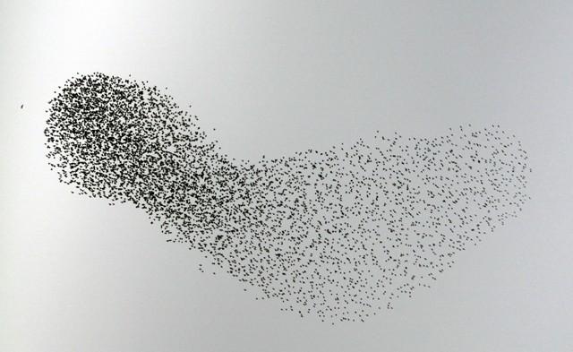 Gökyüzünde Sığırcık Şöleni  galerisi resim 13