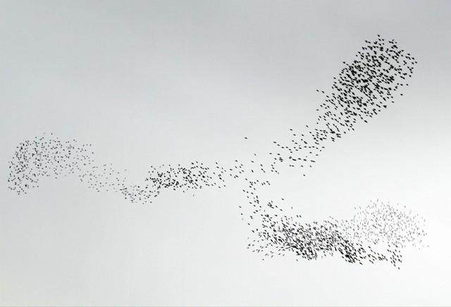 Gökyüzünde Sığırcık Şöleni  galerisi resim 15