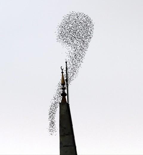 Gökyüzünde Sığırcık Şöleni  galerisi resim 5