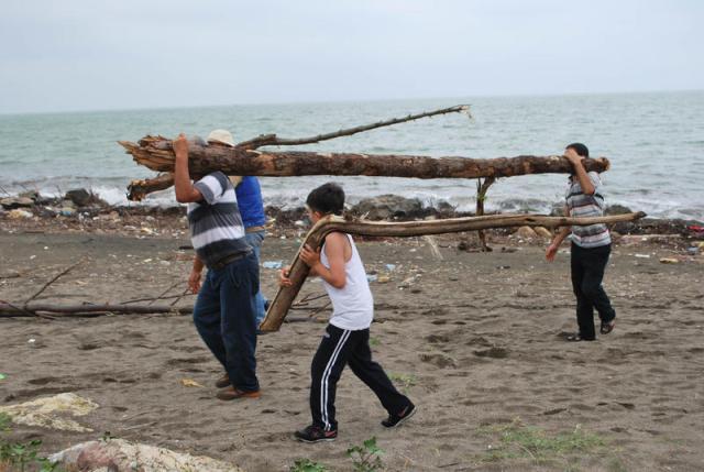 Sel sularının taşığı ağaçları denizden topladılar galerisi resim 1