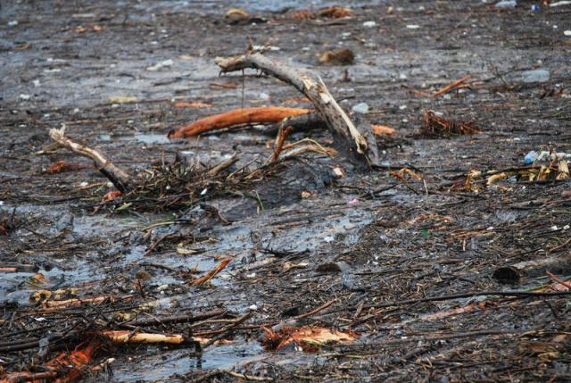 Sel sularının taşığı ağaçları denizden topladılar galerisi resim 2