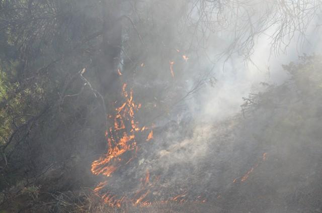 Çorum'da Orman Yangını galerisi resim 6