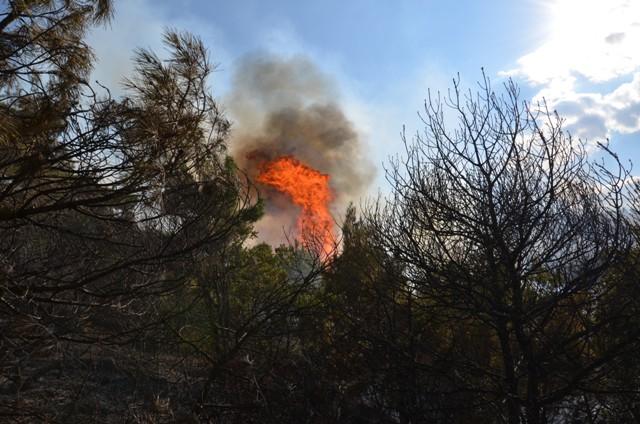 Çorum'da Orman Yangını galerisi resim 7