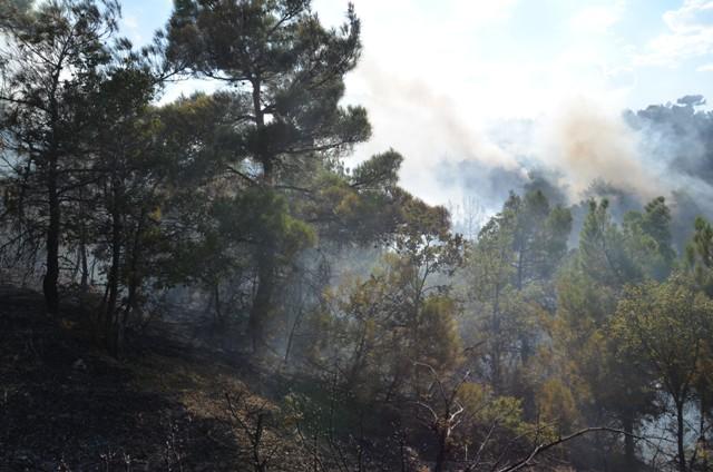 Çorum'da Orman Yangını galerisi resim 9