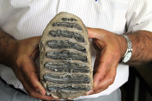 Ladikte Mamut Fosili Bulundu galerisi resim 8