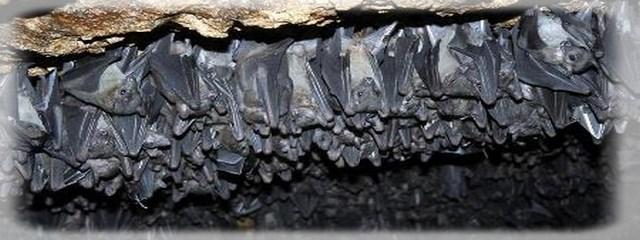 Ballıca Mağarası keşfedilmeyi bekliyor galerisi resim 30