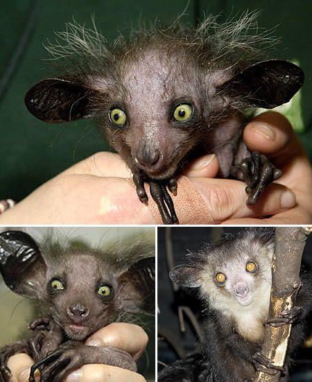 Dünyanın en garip 9 yaratığı! galerisi resim 4