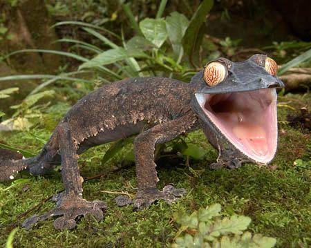 Dünyanın en garip 9 yaratığı! galerisi resim 7