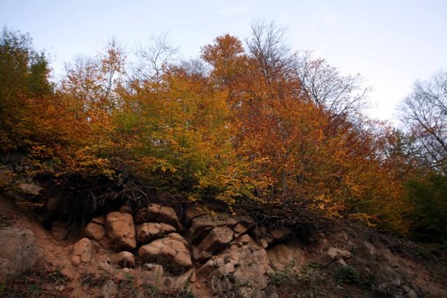 Karadeniz'de sonbahar galerisi resim 24