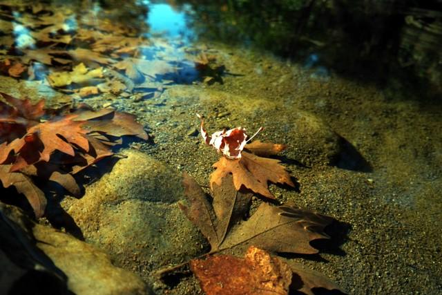 Karadeniz'de sonbahar galerisi resim 32
