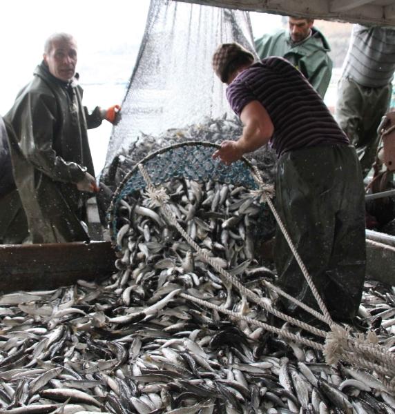Genç balıkçı 30 ton kefalle döndü!  galerisi resim 10