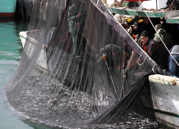 Genç balıkçı 30 ton kefalle döndü!  galerisi resim 9
