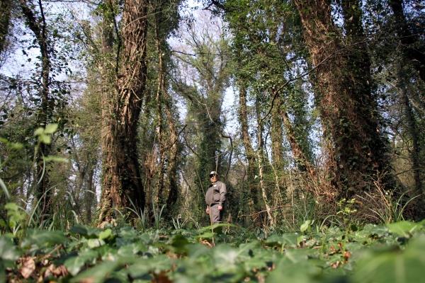 Yeşilırmakla beslenen balta girmemiş orman galerisi resim 12