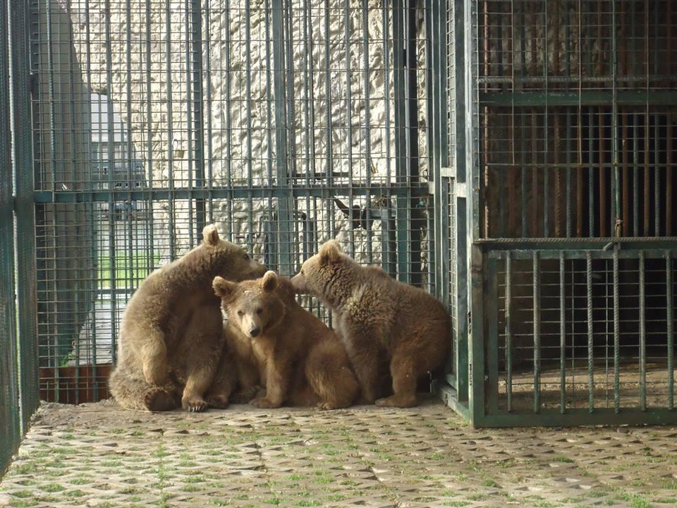 Sıcak Havadan Samsun Hayvanat Bahçesi'ndeki Hayvanlar da Bunaldı galerisi resim 1