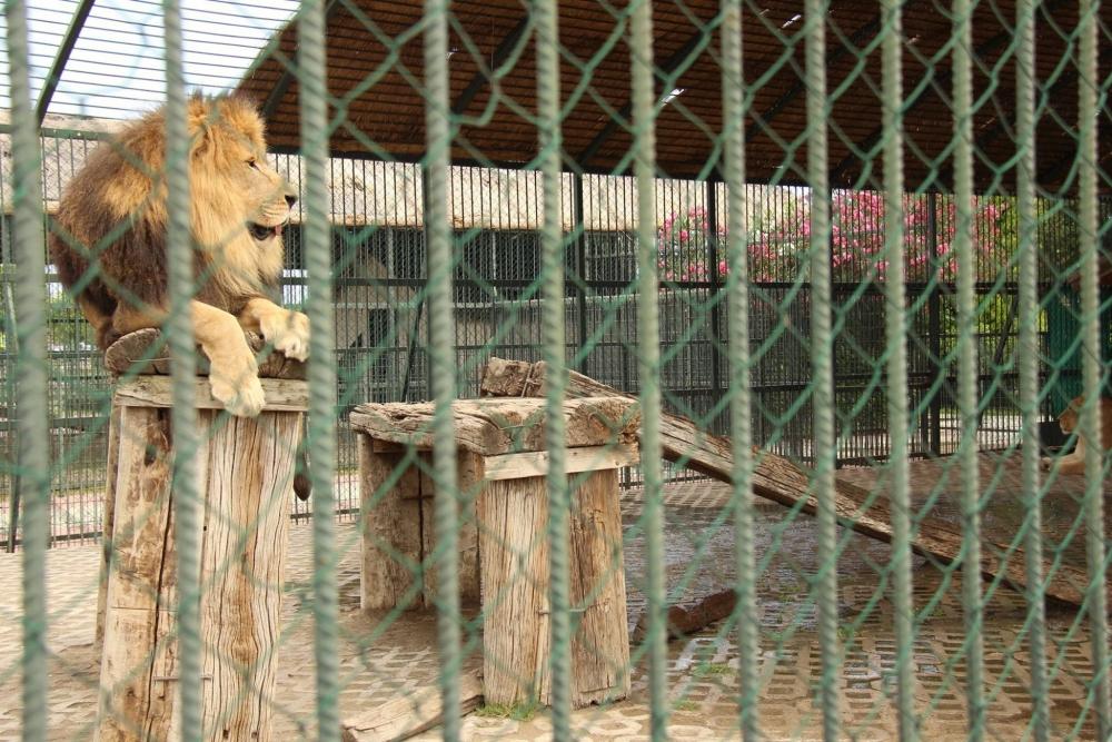 Sıcak Havadan Samsun Hayvanat Bahçesi'ndeki Hayvanlar da Bunaldı galerisi resim 3
