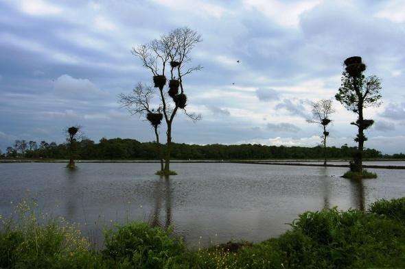 Kızılırmak deltası dünyaya açılacak galerisi resim 4