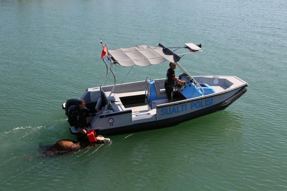 Samsun Deniz Polisinden Tosun Operasyonu! galerisi resim 1