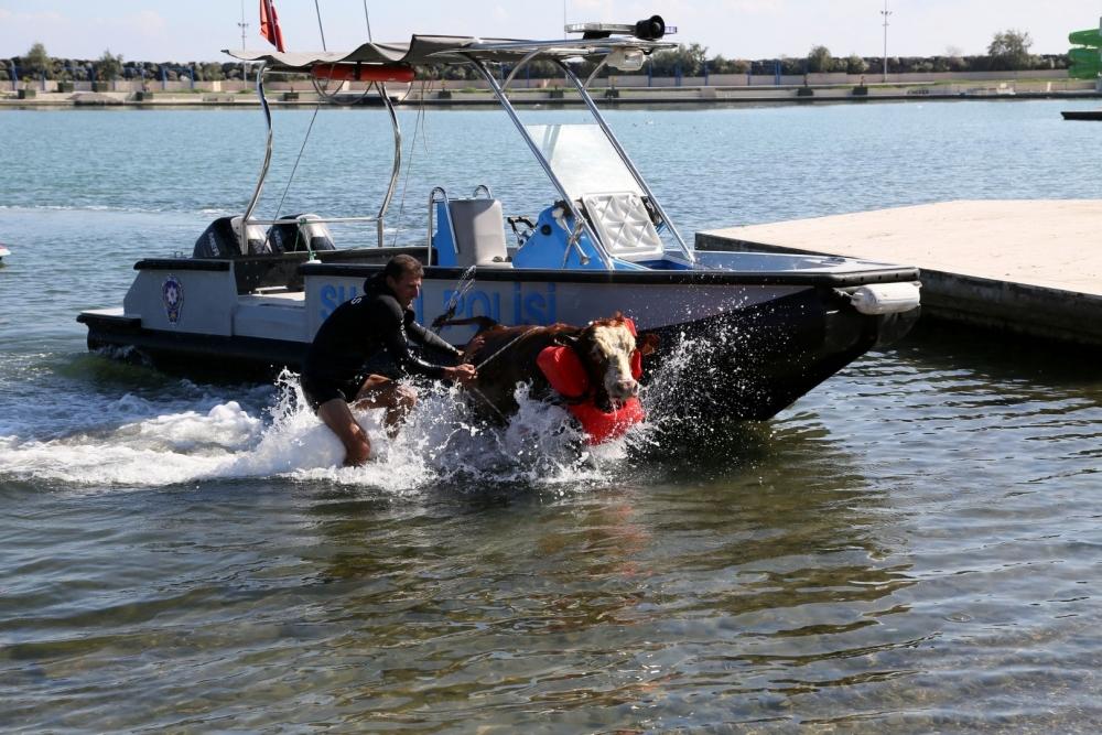 Samsun Deniz Polisinden Tosun Operasyonu! galerisi resim 3