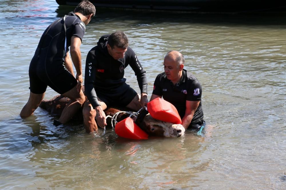 Samsun Deniz Polisinden Tosun Operasyonu! galerisi resim 8