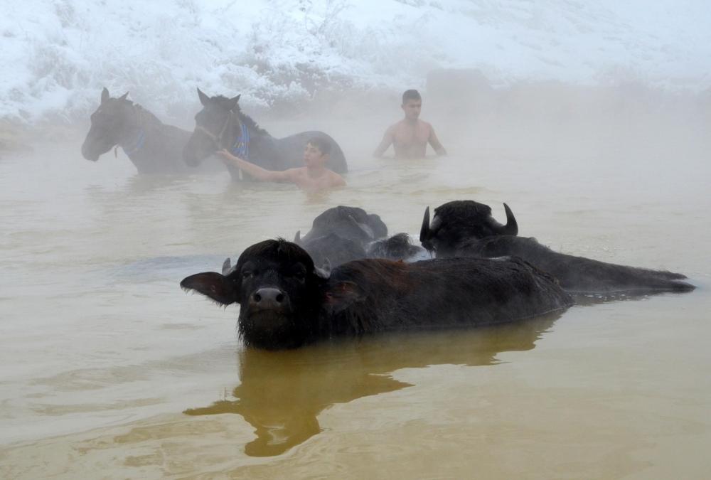 Manda ve Atlarını Kaplıca Sularında Yıkıyorlar galerisi resim 17