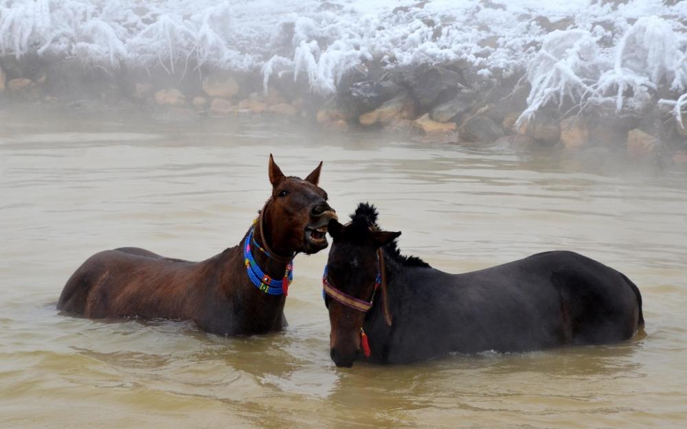 Manda ve Atlarını Kaplıca Sularında Yıkıyorlar galerisi resim 5