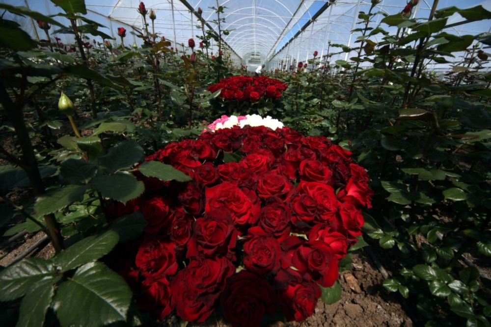 Çiçekçilerin Umudu 14 Şubat galerisi resim 13