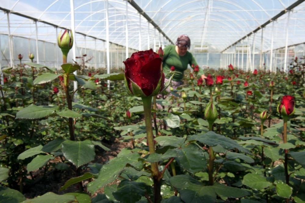 Çiçekçilerin Umudu 14 Şubat galerisi resim 7