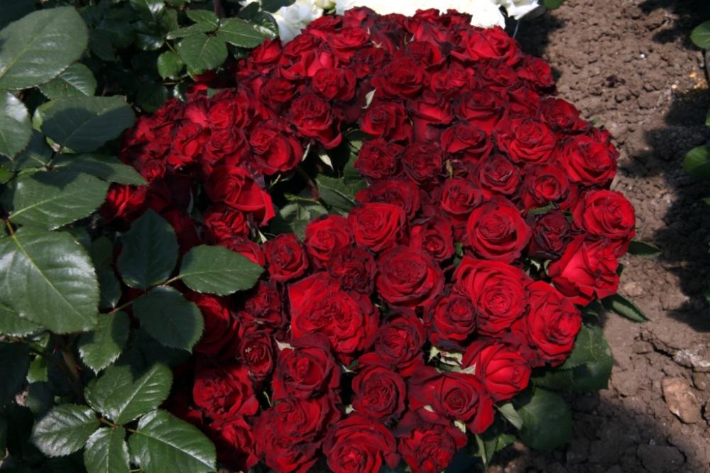 Çiçekçilerin Umudu 14 Şubat galerisi resim 8