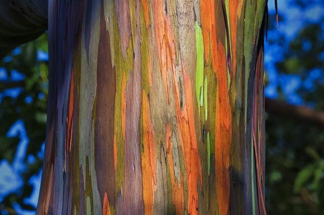 Dünyanın En İlginç Ağacı galerisi resim 1