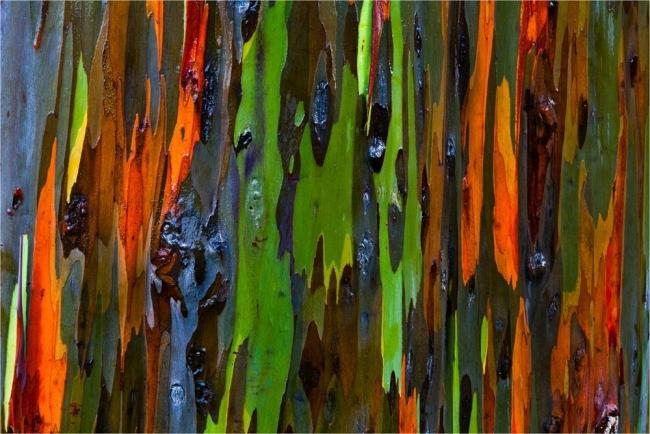 Dünyanın En İlginç Ağacı galerisi resim 2