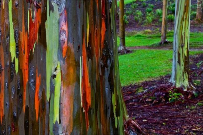 Dünyanın En İlginç Ağacı galerisi resim 4