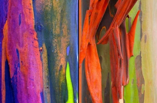 Dünyanın En İlginç Ağacı galerisi resim 6