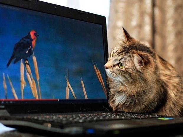 Teknoloji Kedilerin Hayatını Nasıl Değiştirdi? galerisi resim 14