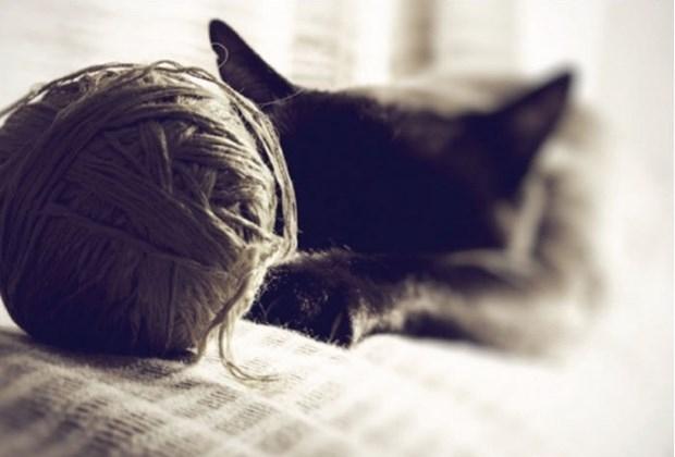 Teknoloji Kedilerin Hayatını Nasıl Değiştirdi? galerisi resim 3