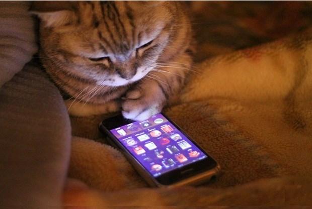 Teknoloji Kedilerin Hayatını Nasıl Değiştirdi? galerisi resim 4
