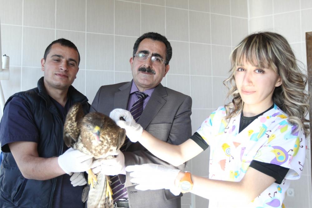 Samsun'da Yaralı Hayvanlara Devlet Şefkati galerisi resim 10