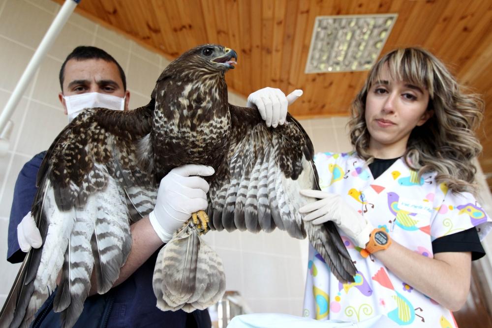 Samsun'da Yaralı Hayvanlara Devlet Şefkati galerisi resim 11