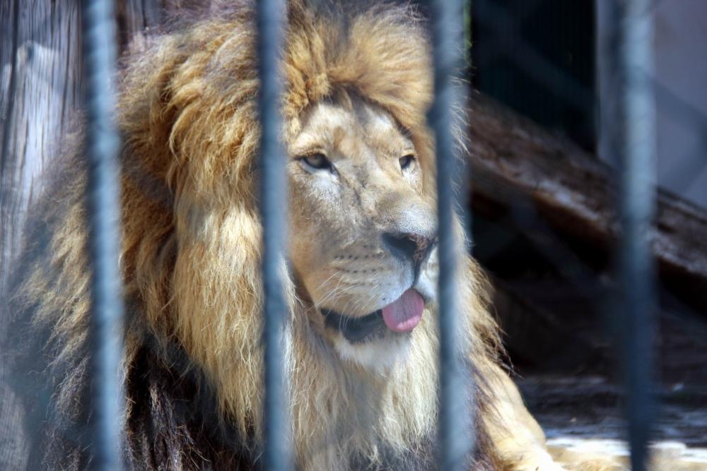 Hayvanat Bahçesi'ndeki Hayvanların Sıcakla İmtihanı galerisi resim 1