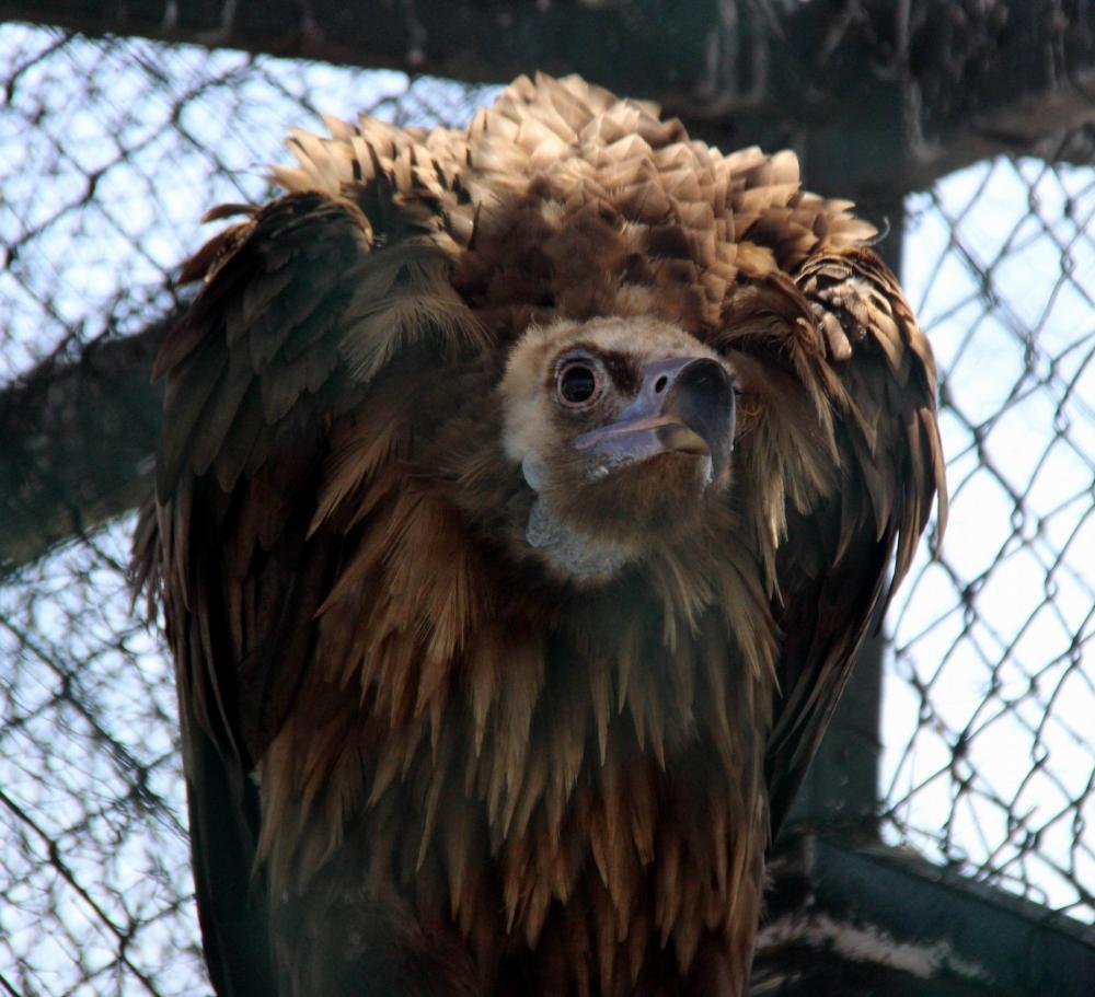 Hayvanat Bahçesi'ndeki Hayvanların Sıcakla İmtihanı galerisi resim 3