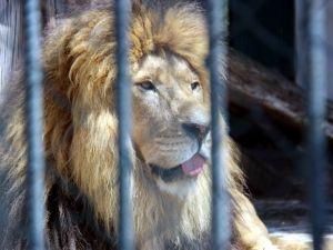 Hayvanat Bahçesi'ndeki Hayvanların Sıcakla İmtihanı