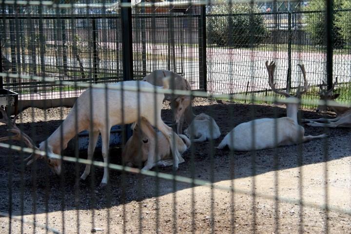 Samsun'da Yabani Hayvanların Sıcakla İmtihanı galerisi resim 8