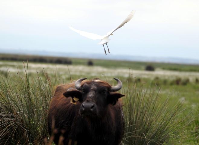 """Samsun Kızılırmak Deltası'ndaki Göçmen Kuşlar """"Özgür"""" Uça galerisi resim 2"""
